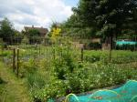 Image: Allotments